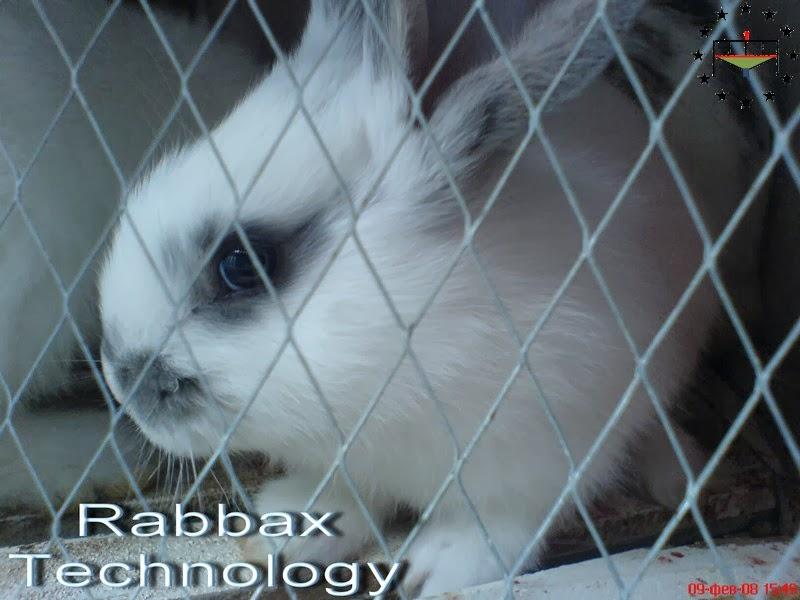 Некробацильоз кролів