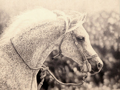 caballos-en-oleo