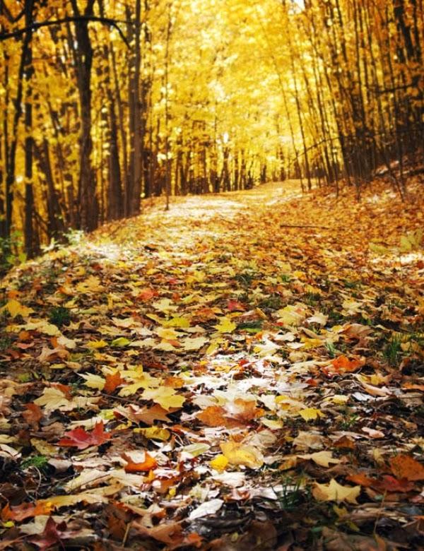 Autumn Leaves ~ Journey's Eye Photography #autumn #leaves
