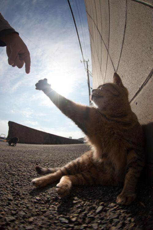 Диалог кота с богом