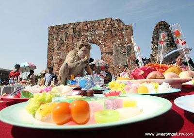 funny_picture_funny_monkey_eating_biscutes_vandanasanju.blogspot.com