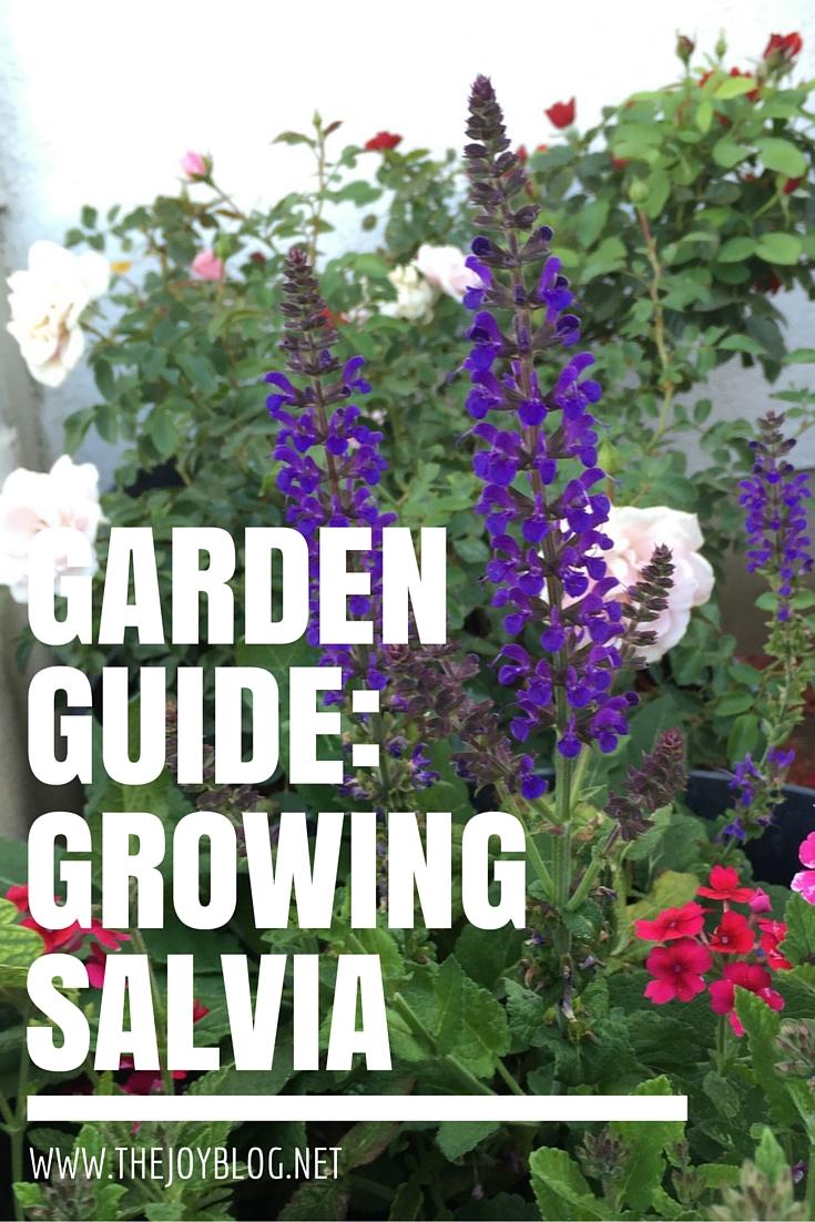 Merveilleux Http://www.garden.org/plantguide/?qu003dshowu0026idu003d2058 ·  Http://www.webmd.com/parenting/features/salvia Faq