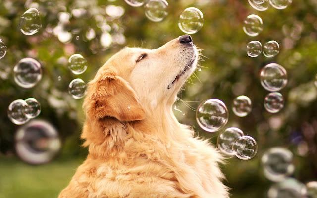 Perro Jugando con Burbujas de Jabon Imagenes de Burbujas