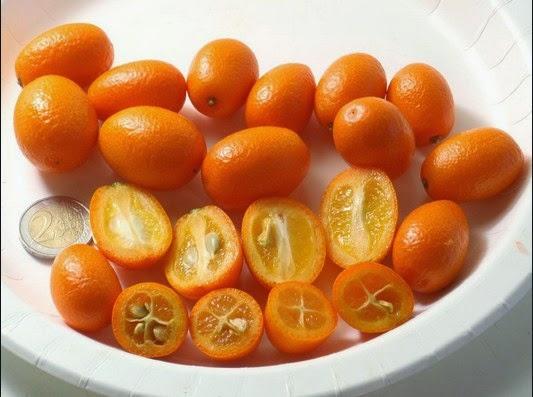 Jeruk Kumquat