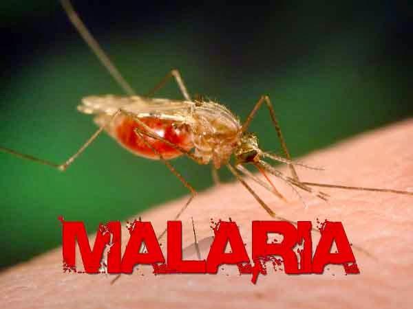 Obat Tradisional untuk Malaria