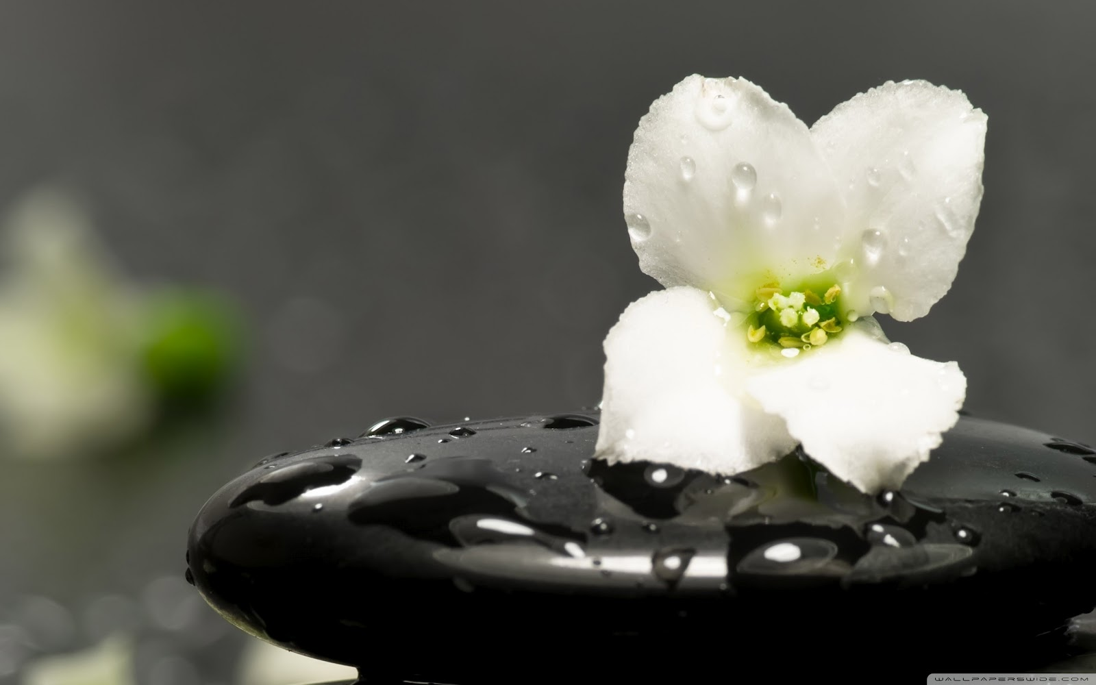 Vivir de forma zen taringa for Photo ecran zen