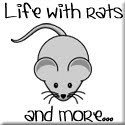 Life with rats and more