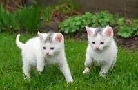 Tips sehat memelihara kucing di rumah