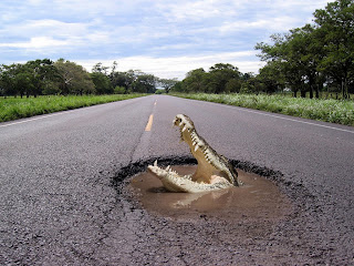 Crocodile on the Road