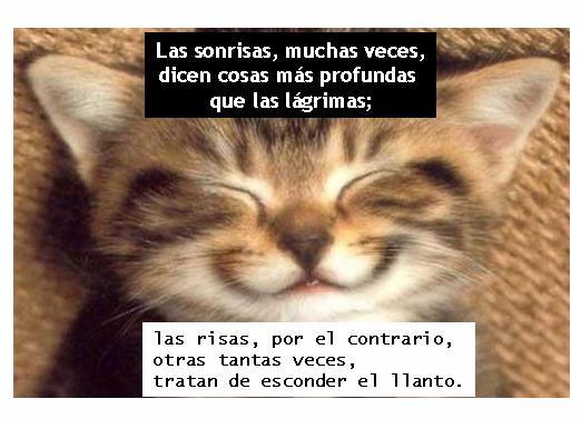 Hoy dedico una sonrisa, ....... - Página 39 Risas_y_Sonrisas%2Bcosasdivertidas-728125