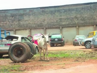Animals arrested due to various reasons