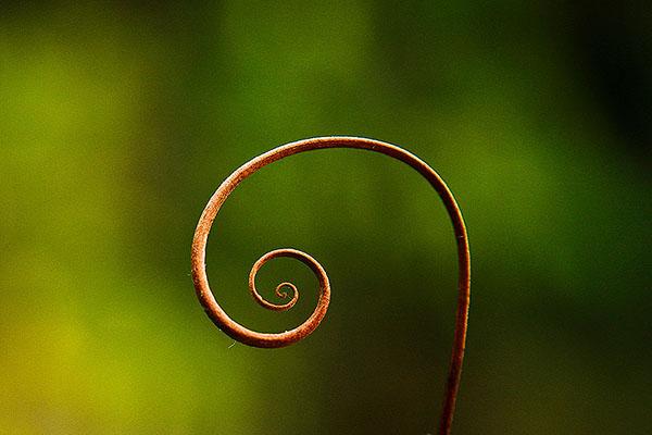 AMAZING AMAZON #7 : Spiral / Espiral