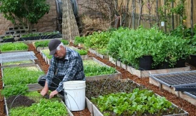 Produce más de 3 toneladas de alimento al año en su hogar