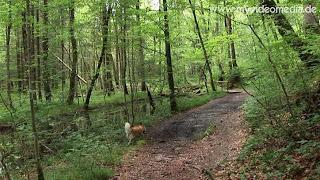 walking trail to Gerorgenstein