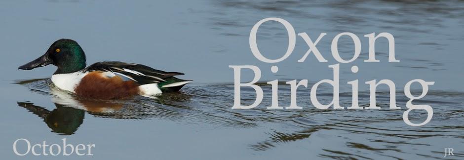 Oxon Birding Blog