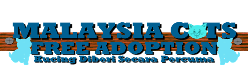 Malaysian Cats Free Adoption (Kucing Diberi Secara Percuma)