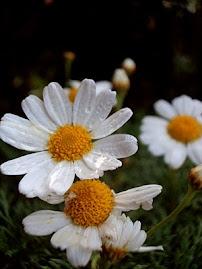 Fiz um achado de palavras e amarrei com um laço de fitas coloquei flores de margaridas ....