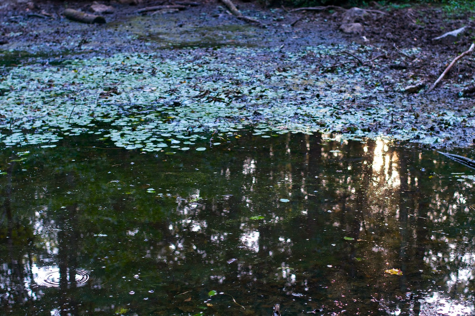 Reflection in a vernal pond