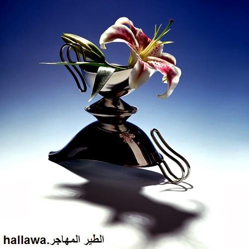 hallawa.blogsppot.nl