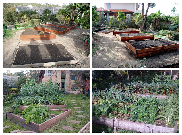Sustainable Backyard Ideas : Sustainable Garden Design providing all year round food source