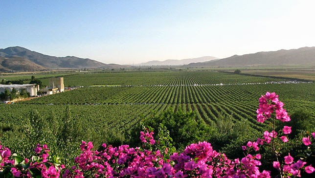 Notas del Valle de Guadalupe: Shout Out: Mother Nature Network