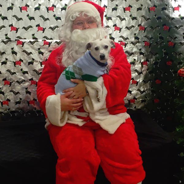 Petsmart Santa
