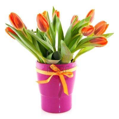 Lilla 39 s gifs dividers tulipani tulips tulipes for Tulipani arancioni