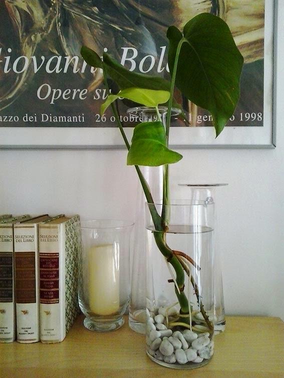 tra orto e giardino blogspot