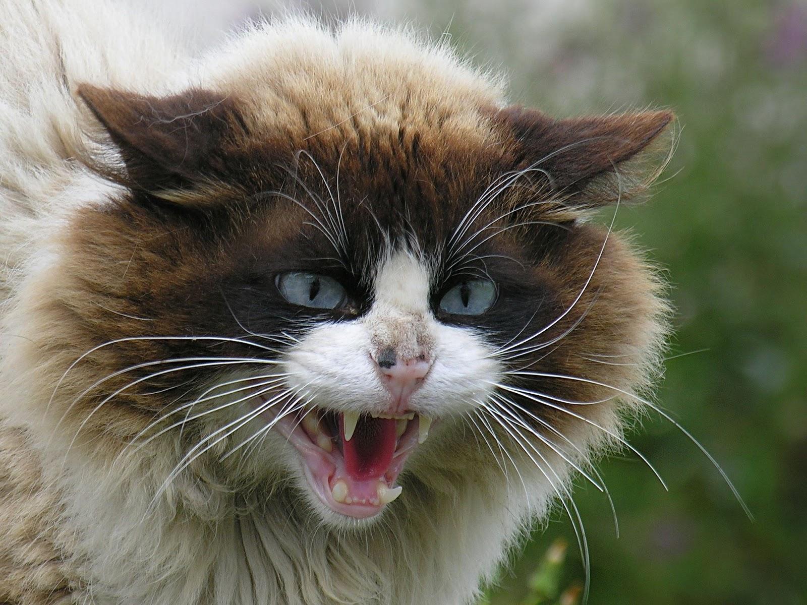 photos of kitten
