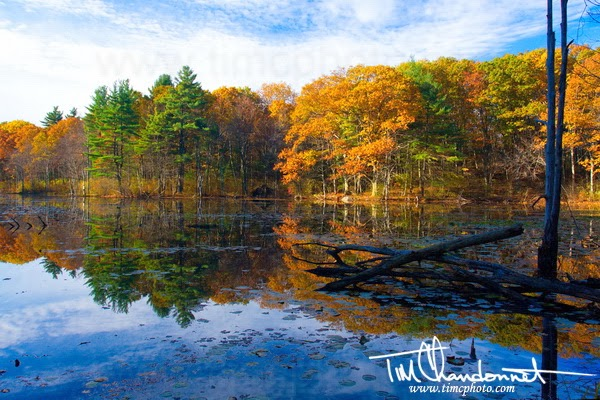 tim chandonnet photography, tim c photo, Dracut, Massachusetts, Merrimack Valley, New England, Travel Photography, Travel Photographer, Bellingham Washington Photographer, Bellingham photographer, Northeast, photography, Photos, conservation area, foliage, colorful, nature