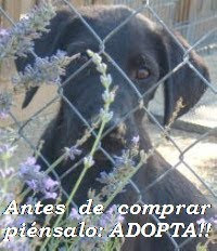 ADOPTA !!! ...
