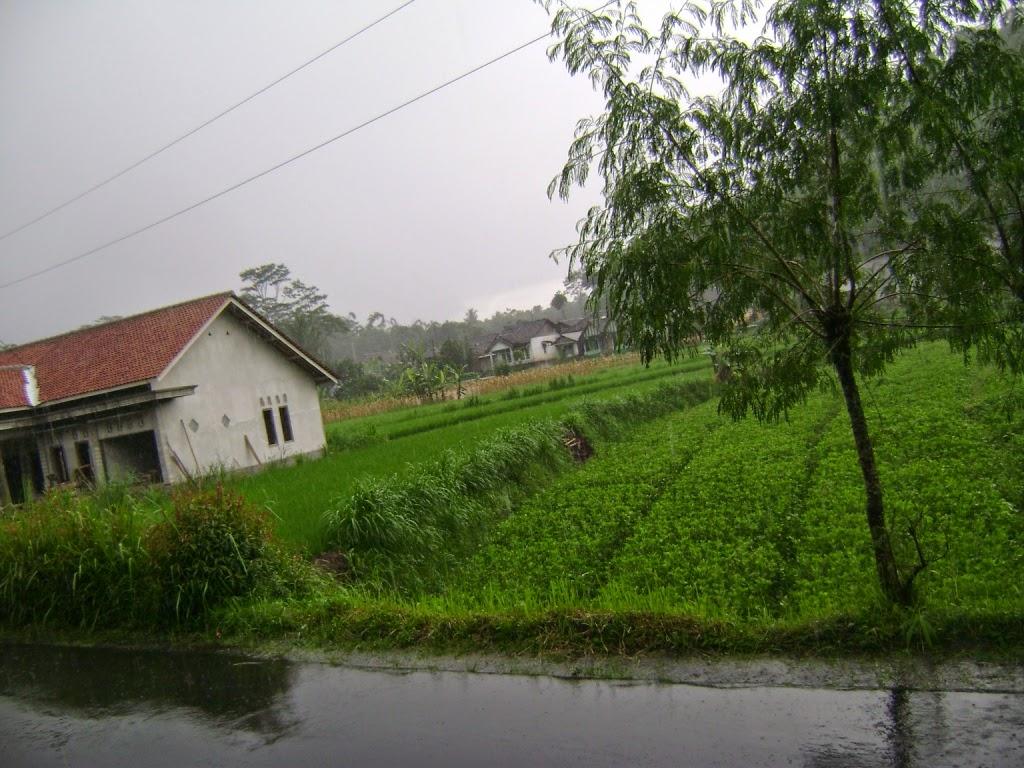 Jual Tanah Sawah di Temanggung