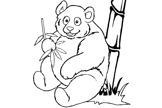 صورة دب الباندا يأكل بعض أوراق الأشجار
