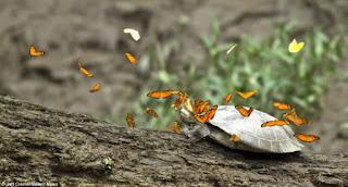 CIDADES - Pesquisa com borboletas ajuda a alertar sobre a degradação da Floresta Amazônica