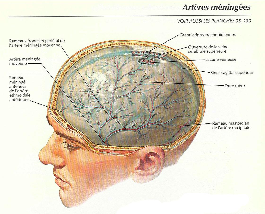El cerebro como pseudoexplicación   Razón Atea