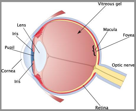 How the eye works the basics e y e o p i a drpete how the eye works the basics ccuart Choice Image