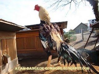 AYAM Bangkok - Pakhoy (Foto 6) - YouTube