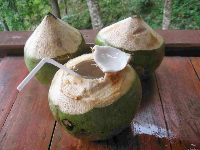 Разновидности кокосов