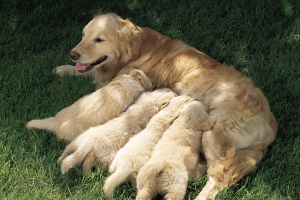 09 mitos sobre cães