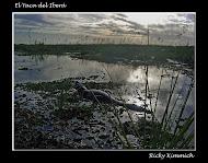 El Yaca del Iberá