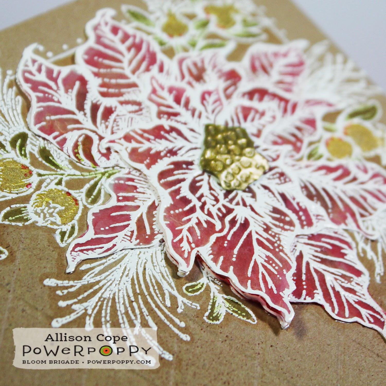Power Poppy Poinsettia