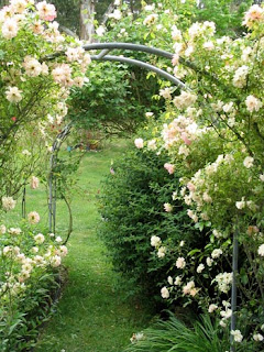 white roses over an arbor entrance to a garden