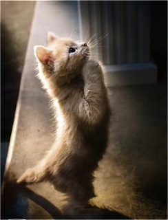 cat-praying.png