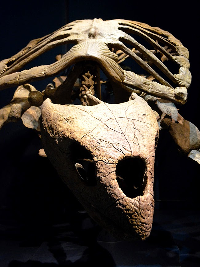 Tellus Science Museum, Fossil Gallery, Turtle