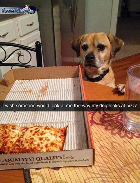funny dog pizza picture
