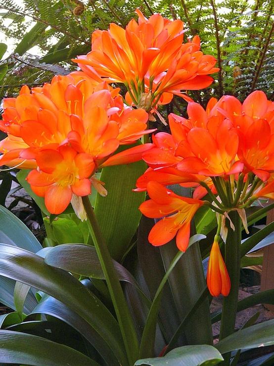 Um jardim para cuidar flores no seu jardim no inverno - Plantas de exterior resistentes ...