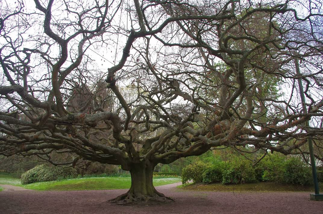 Le jardin des couronnes le jardin botanique de bayeux for Entretien jardin bayeux