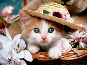 Foto Kucing Lucu Imut dan Menggemaskan 13