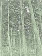 L'albero (2)