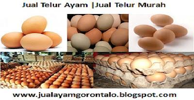 Jual Ayam Ternak | Jual Ayam Pedaging | Jual Ayam Murah | Harga Sesuai Pasar |  Hubungi Hardiyanto Takula : 087846861333 - 082271097919  www.jualayamgorontalo.blogspot.com